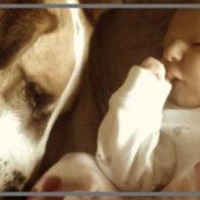 cani&bambini horizontal