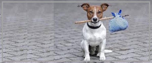 arriva un nuovo cane... oh merda!